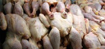 TENKODOGO:11,150 t de poulets de chair congelés saisis