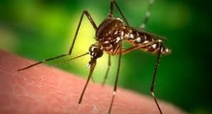 ENVIRONNEMENT ET SANTÉ: Une marche le 2 juin 2018 contre l'utilisation des ''moustiques OGM''